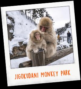 Jigokudani Monkey Park Japan